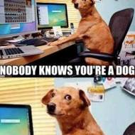 15-05-dog-on-internet