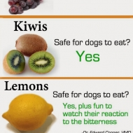 fruit-safe-for-dogs-to-eat