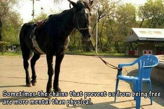 15-12-chains-bind-us-horse-tied-to-mental-limitations