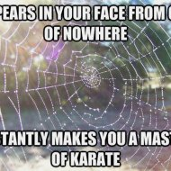 16-03-spider-web-karate-master