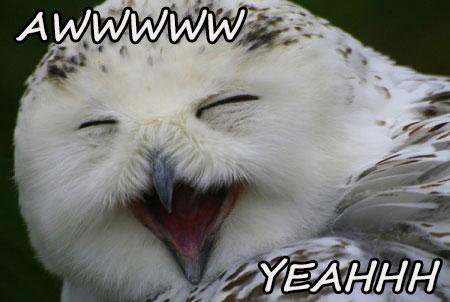 16-08-owl-smile-aww-yeah-millionaire