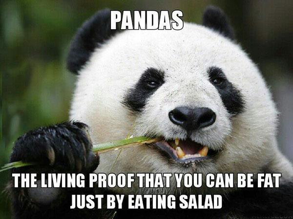 16-10-pandas-proof-vegetarian-burn