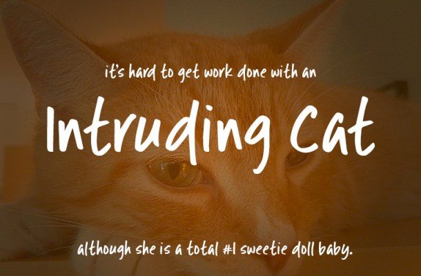 Intruding Cat Free Font