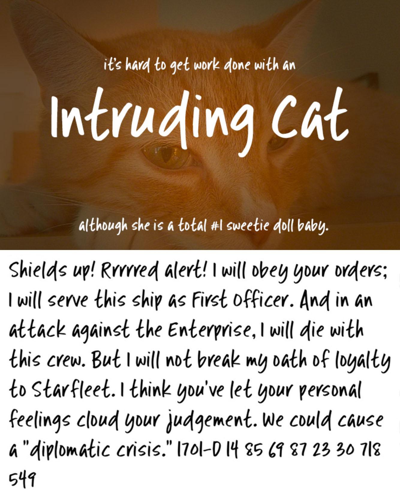 Intruding Cat