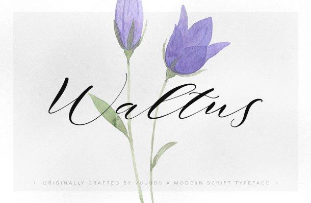 Waltus Script Font