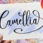 Camellia Calligraphy Font