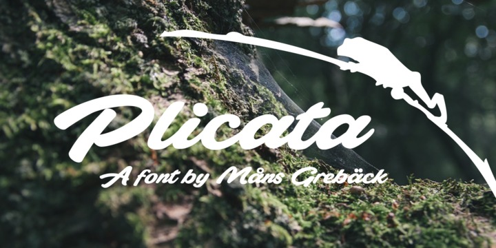 plicata3