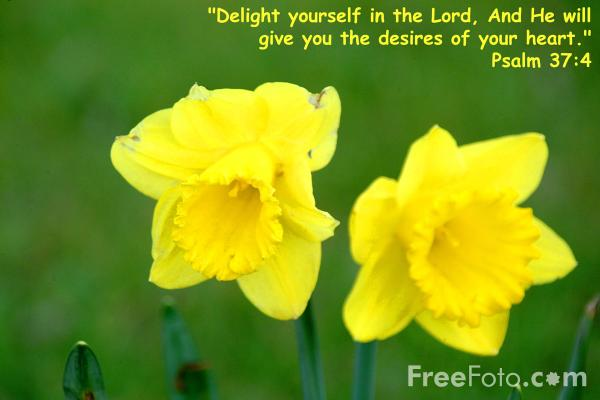 Picture of Delight yourself in the LORD - Free Pictures - FreeFoto.com