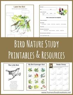 Bird-Nature-Study-Printables-from-Homeschool-Creations