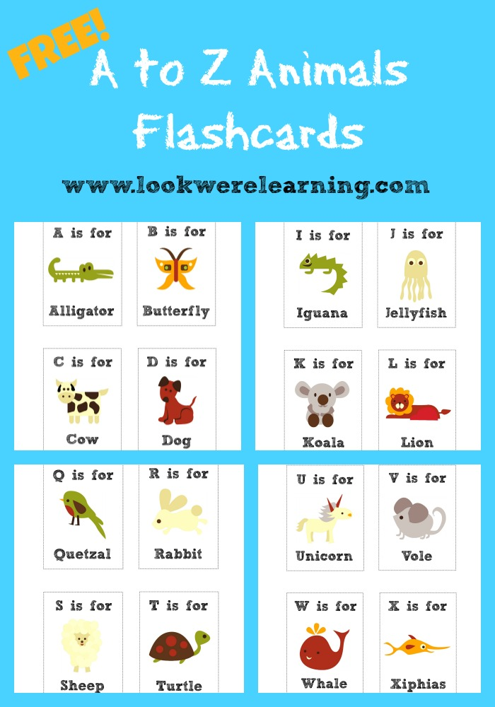 First Flash Cards Reading Grade
