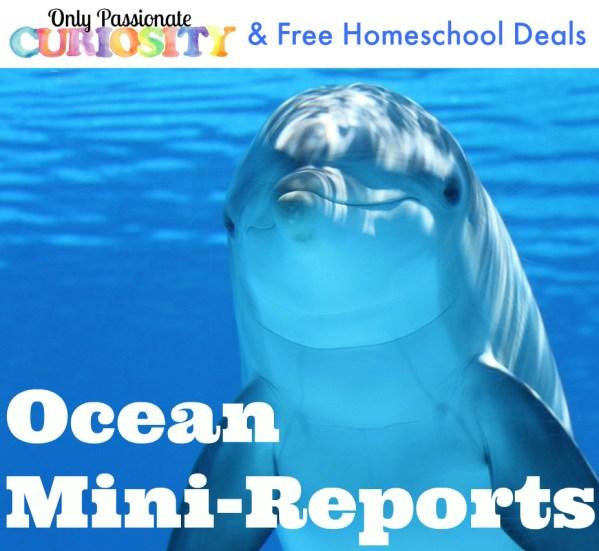 Mini Reports