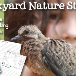 FREE Bird Nature Study Notebook Pages