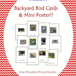 FREE Backyard Birds Cards and Mini Poster