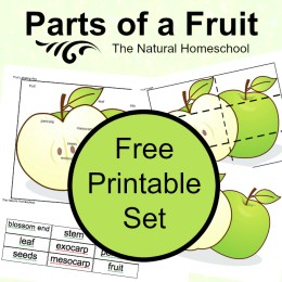 FREE Parts of a Fruit Botany Set