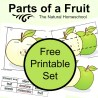 FREE Parts of a Fruit Set