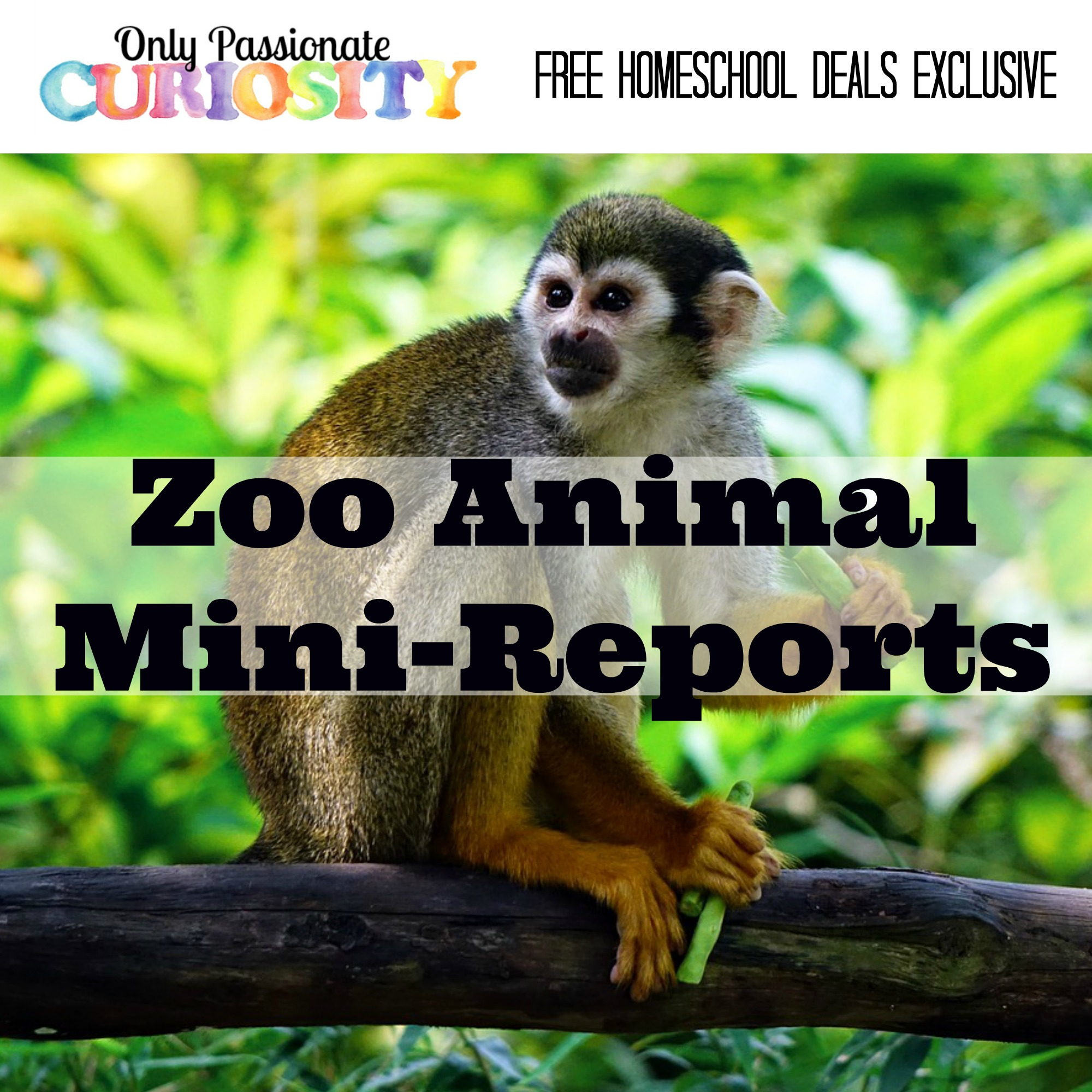 Free Zoo Animal Mini Reports Instant Download