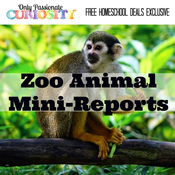 Zoo Animals Mini Reports