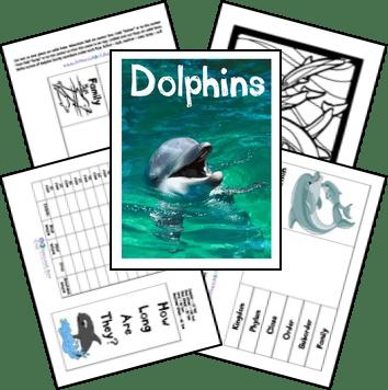 FREE Dolphin Lapbook