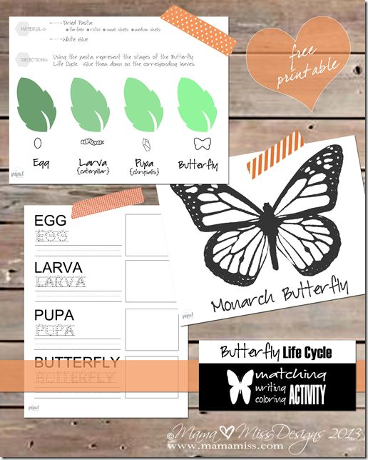 FREE Butterfly Life Cycle Pack