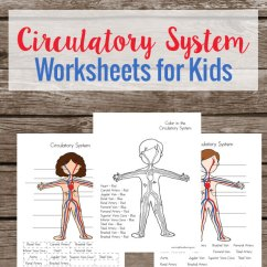 Circulatory System Heart Diagram Worksheet Facial Muscles Unlabeled Free Worksheets For Kids | Homeschool Deals