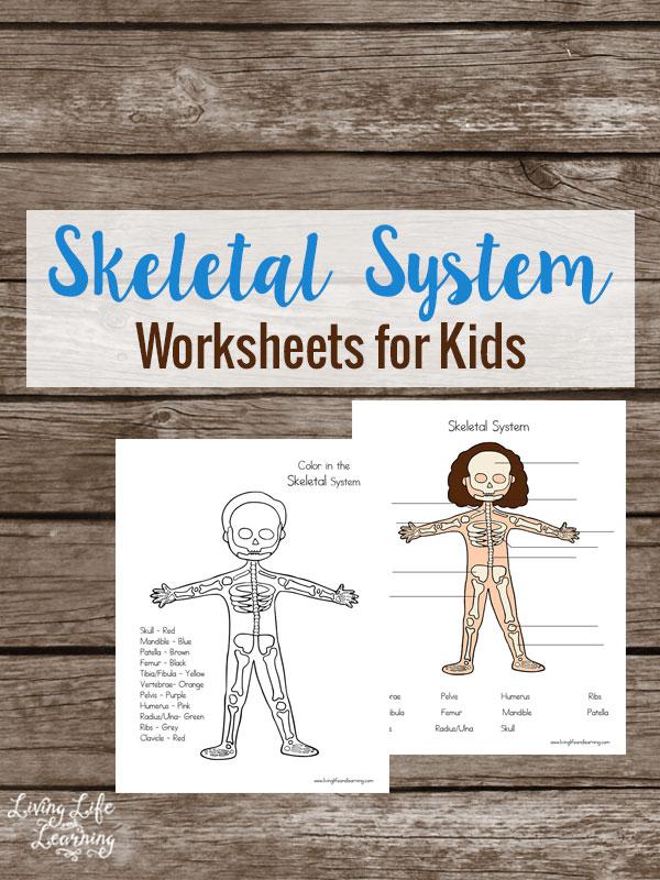 FREE Skeletal System Worksheets