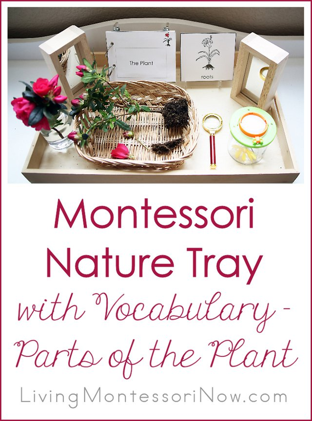 FREE Parts of a plant Vocabulary Cards and Activity
