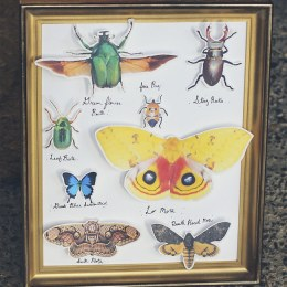 FREE Printable Insect Collection