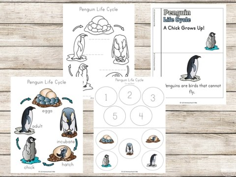 Free Penguin Life Cycle Pack