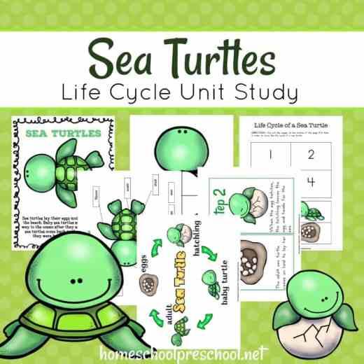 Free Sea Turtle Life Cycle Unit Study