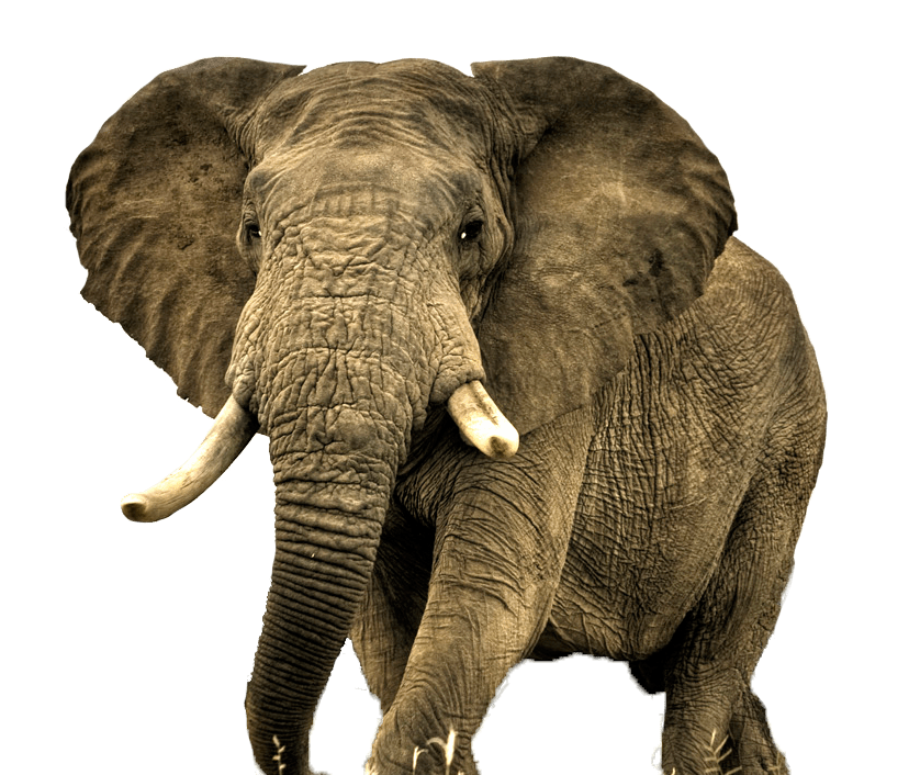 Animal Elephant Photo 43229 Free Icons And Png Backgrounds