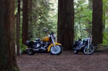 Free Stock 3105-classic Motocycles