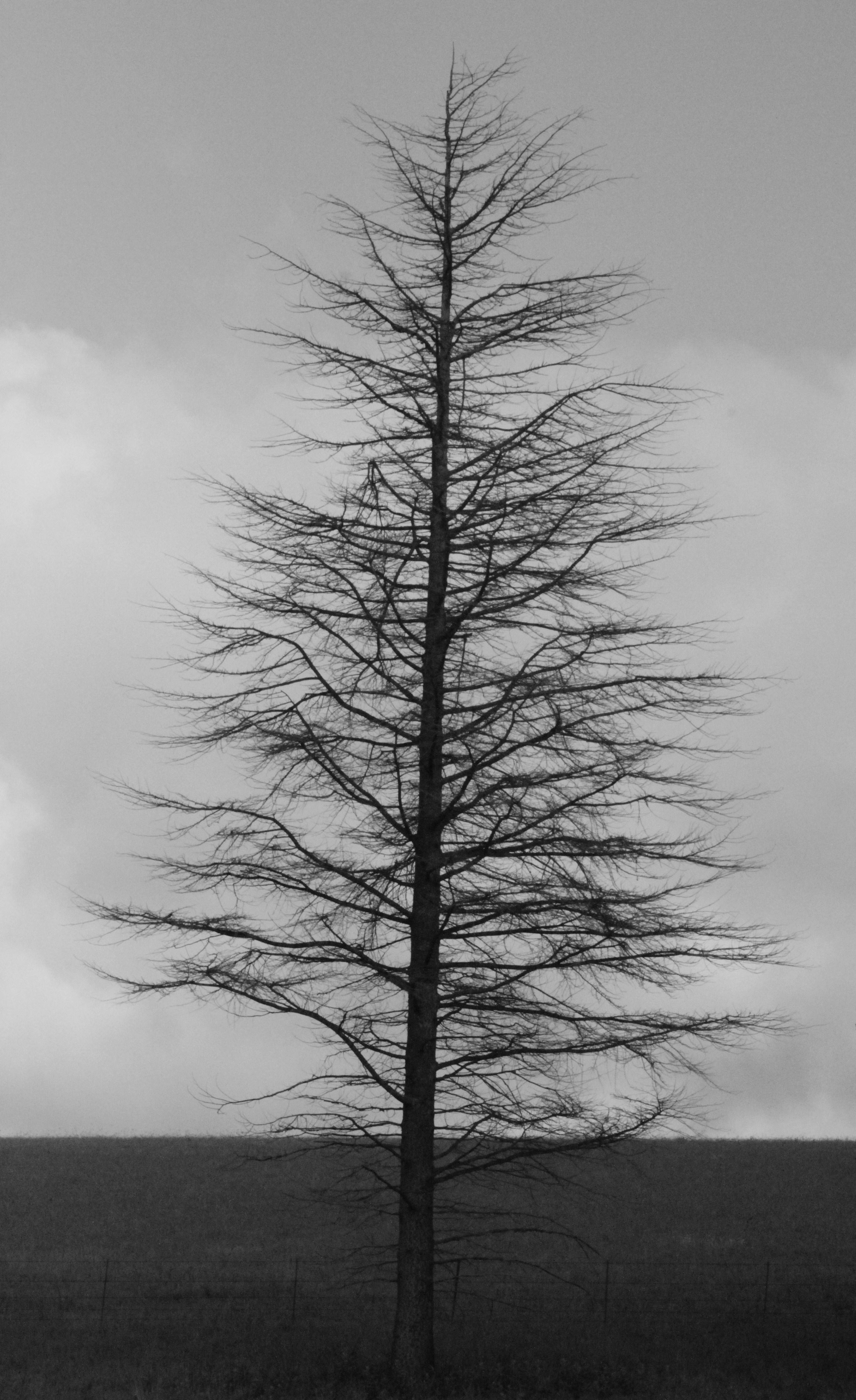 Free Stock Photo 4651 winter tree  freeimageslive