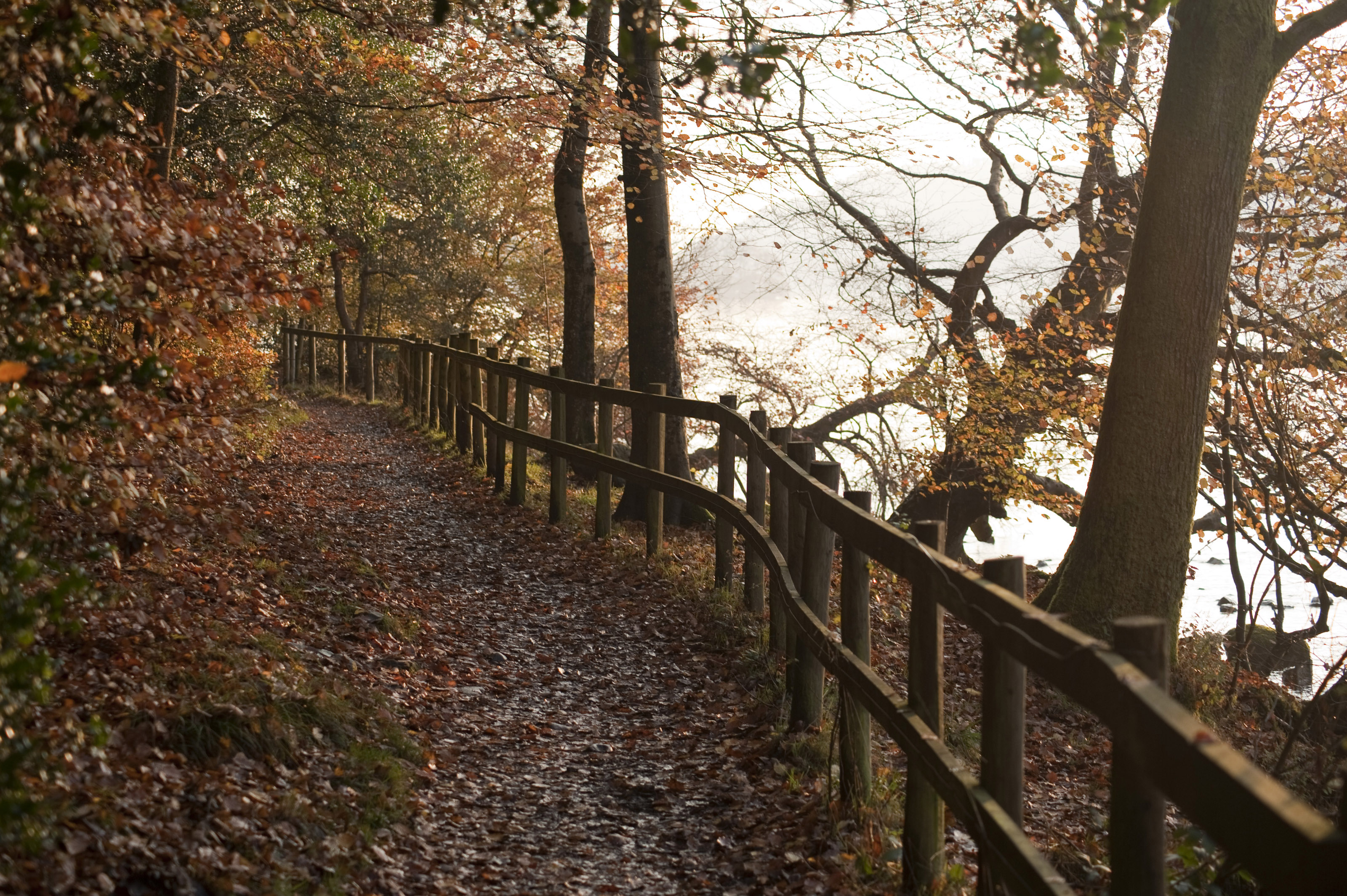 Free Wallpaper Pictures Of Fall Free Stock Photo 5157 Path Through Autumn Forest