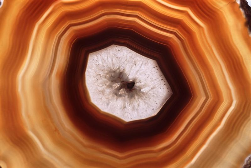 Free Stock Photo: Background with overhead view of tree rings colored orange, brown and yellow with a white middle