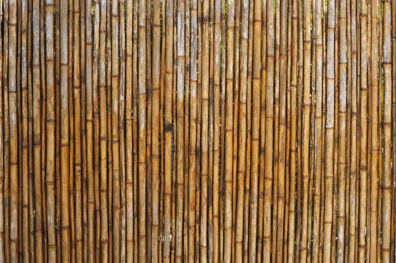Tall Bamboo Screening