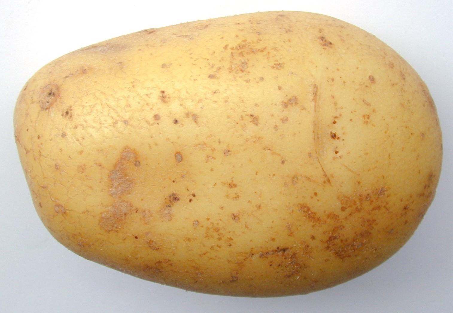 https://i0.wp.com/www.freeimageslive.com/galleries/food/fruitveg/pics/potato0730.jpg