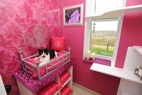 The Ings Luxury Cat Hotel Dewsbury  Cattery  FreeIndex
