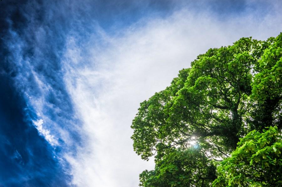Imagen de paisaje cielo verde arbol arboles luz