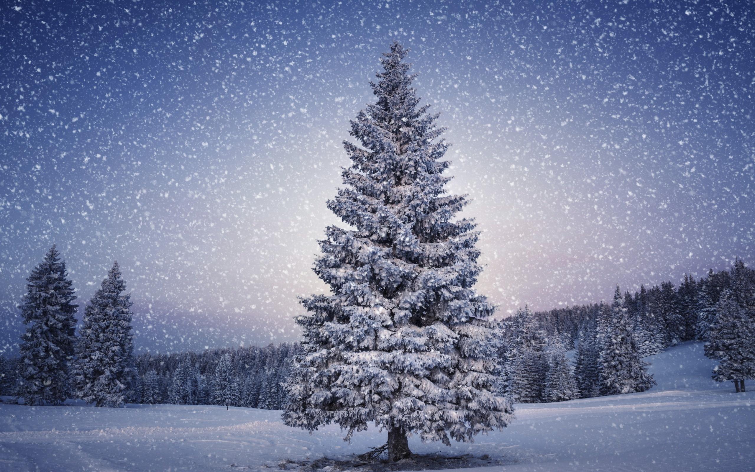 Afbeeldingsresultaat voor christmas tree wallpaper