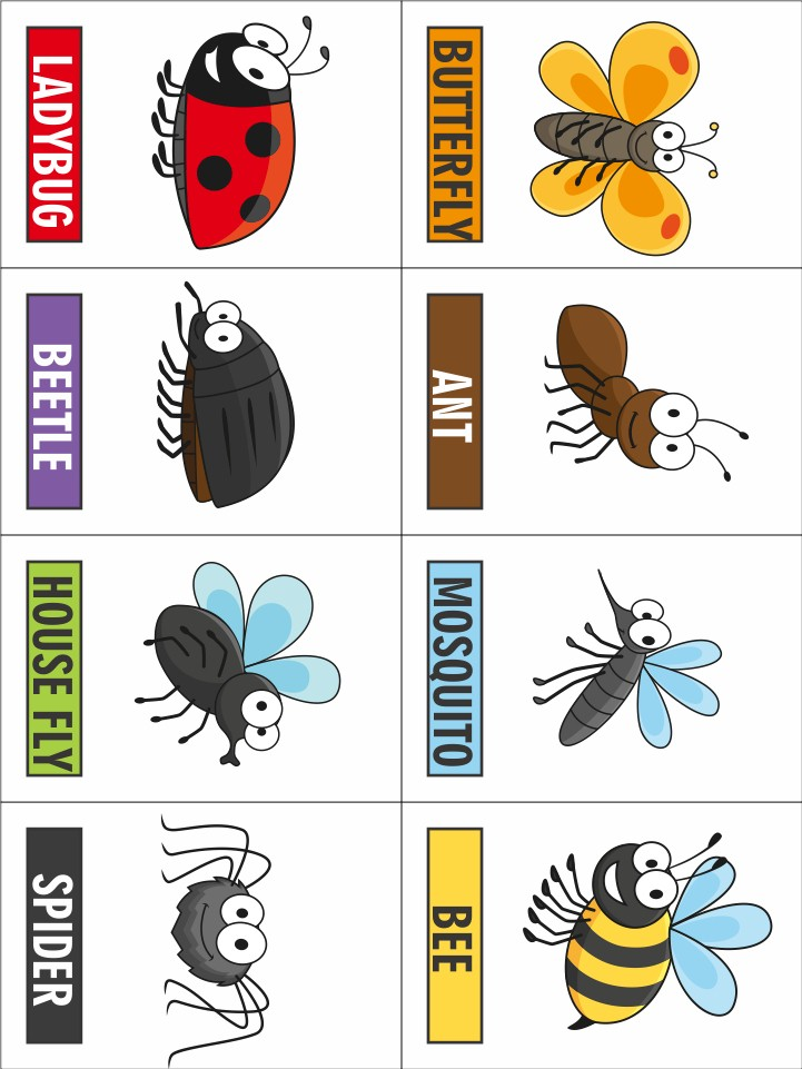 photo relating to Printable Bugs identify Printable Bug Match