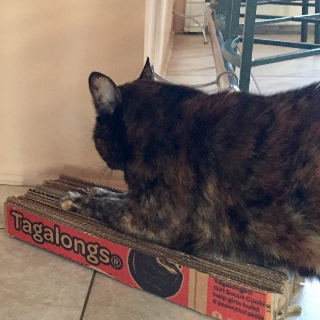 Image of Cat Scratching Pad Made From Recycled Cardboard Scout Cookie Cartons
