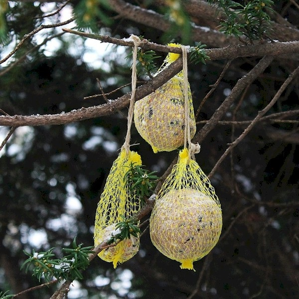DIY Suet Bird Feeder