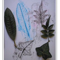 Image of Leaf Rubbings