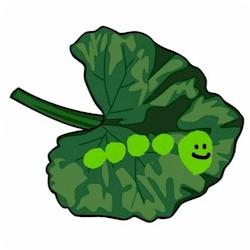 Image of Toeprint Caterpillar