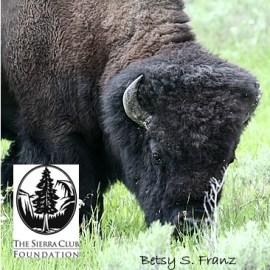 The Sierra Club Foundation