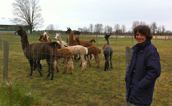 Ute with some of her alpacas.