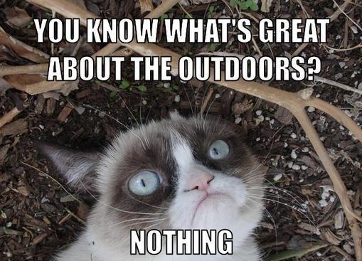 Best Grumpy Cat Work Memes