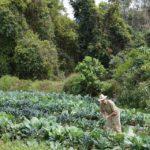 david freeman harvest crops produce organic seasonal