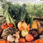 Bargain monday fruit and vegie box