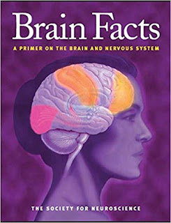 brain facts a primer on the brain and nervous system pdf,brain facts a primer on the brain and nervous system apa citation,brain facts a primer on the brain and nervous system society for neuroscience 2012,brain facts a primer on the brain and nervous system 2018,facts about brain and nervous system,facts about the brain in the nervous system
